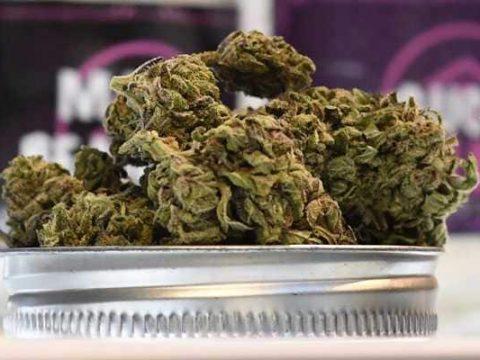 marijuana california afp 650x400 61514835112