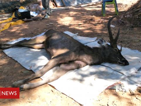 109905798 deer1