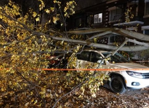 ville emard tree outages storm
