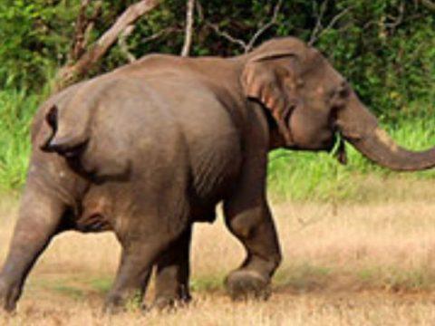 6fd9f2cb elephant attack edited 850x460 acf cropped