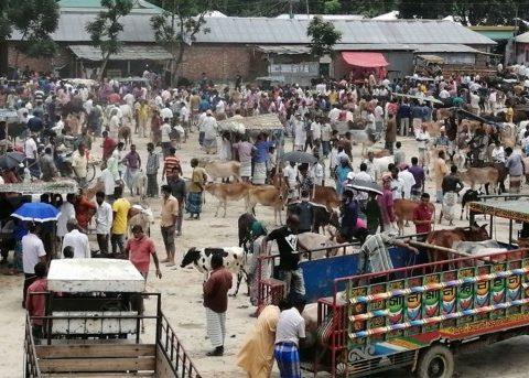 cattle markets corona risk 0 1