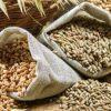 grains 650x400 61456973153