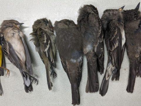15BIRDS facebookJumbo