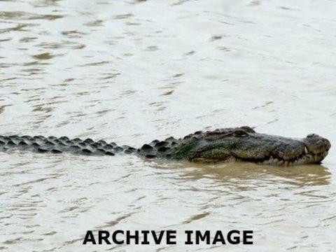 a5504408 0576ac9f crocodile file 1 850x460 acf cropped