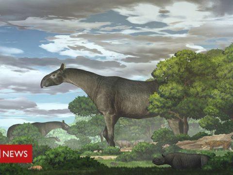 118972871 giantrhino