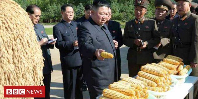 118980202 kim corn