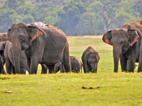 c9749254 af62cd2c wild elephant 850x460 acf cropped